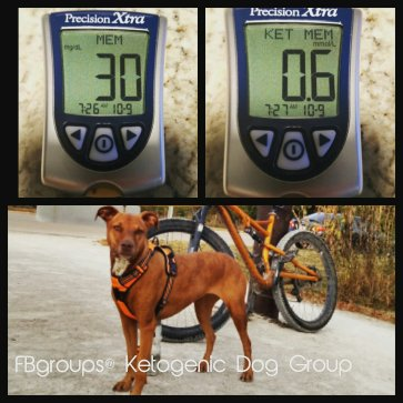 picture of dog and bicycle with ketone and glucose meter readings verifying ketosis in dog